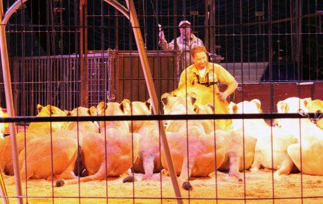 starpac premium event sparkassenblog sparkasse straubing circus krone